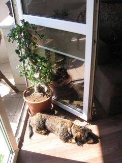 Frida u bram balkonu