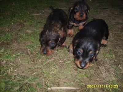 Frida i rodzeństwo - 5 tygodni