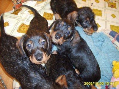 Frida i rodzeństwo - 9 tygodni